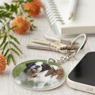 Saint Bernard dog beautiful photo Double-Sided Round Acrylic Key Ring