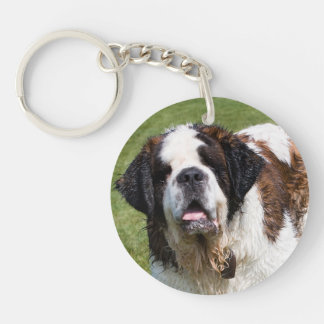 Saint Bernard dog beautiful photo Double-Sided Round Acrylic Key Ring