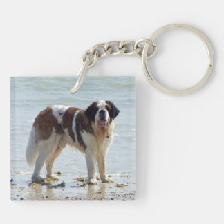 Saint Bernard dog beautiful photo Double-Sided Square Acrylic Key Ring