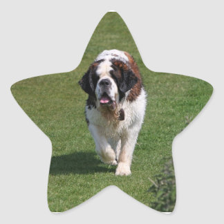 Saint Bernard dog beautiful photo stickers