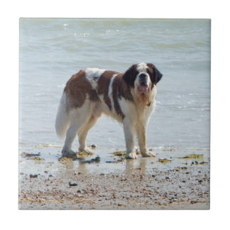 Saint Bernard dog beautiful tile or trivet, gift