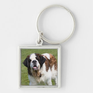 Saint Bernard dog keychain, keyring, gift Silver-Colored Square Key Ring
