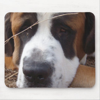 Saint Bernard Dog Mouse Pad