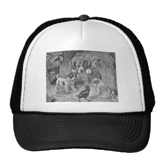 Saint Bernard Dogs and Crow Cap