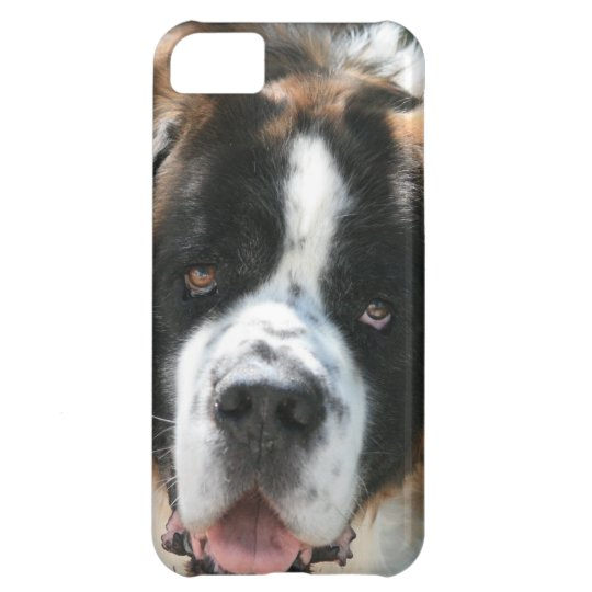 Saint Bernard Face iPhone 5 Barely There Case