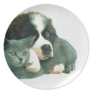 Saint bernard puppy and cat plate