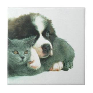 Saint bernard puppy and cat tile