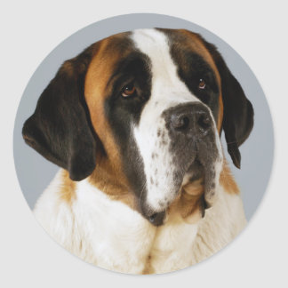 Saint Bernard Puppy Dog  Sticker / Label