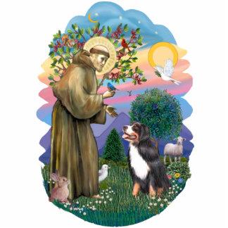 Saint Francis  - Bernese Mountain Dog Standing Photo Sculpture