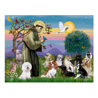 Saint Francis with 10 Dogs Postcard