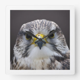 Saker falcon square wall clock