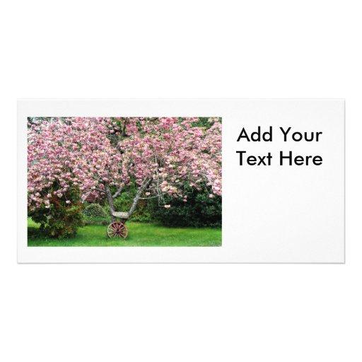 Sakura and Wagon Wheel Photo Cards