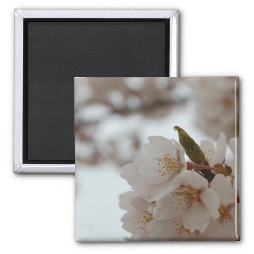 Sakura Beautiful Japanese Cherry Blossom Fridge Magnet