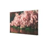 Sakura Canvas Prints
