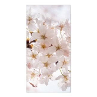 Sakura Cherry Blossom Personalized Photo Card