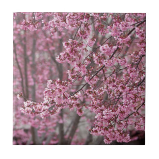 Sakura Cherry Blossoms Flowing Pink Small Square Tile