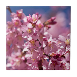 Sakura Cherry Blossoms Kissed by Sunlight Small Square Tile
