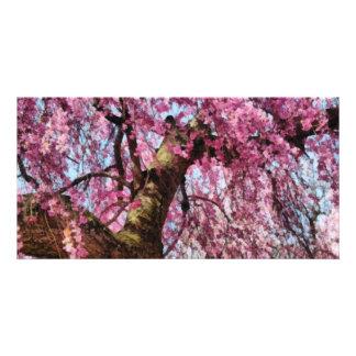 Sakura - Finally it's Spring Photo Cards
