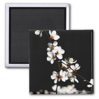 Sakura flowers square magnet