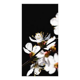Sakura flowers photo greeting card