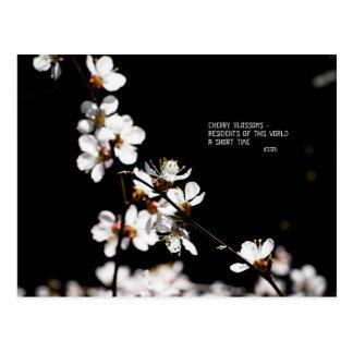 Sakura flowers postcard