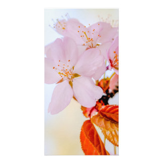 Sakura - Japanese cherry blossom Photo Cards