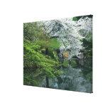 Sakura, Koishikawa Koraku-en Garden, Tokyo, Gallery Wrap Canvas