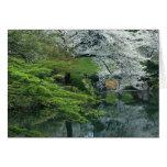 Sakura, Koishikawa Koraku-en Garden, Tokyo, Greeting Card
