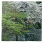 Sakura, Koishikawa Koraku-en Garden, Tokyo, Large Square Tile