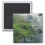 Sakura, Koishikawa Koraku-en Garden, Tokyo, Refrigerator Magnets