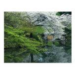 Sakura, Koishikawa Koraku-en Garden, Tokyo, Postcard
