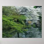 Sakura, Koishikawa Koraku-en Garden, Tokyo, Poster