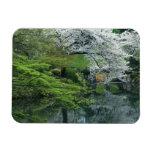 Sakura, Koishikawa Koraku-en Garden, Tokyo, Rectangle Magnets