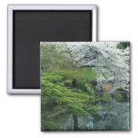Sakura, Koishikawa Koraku-en Garden, Tokyo, Square Magnet