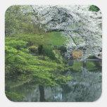 Sakura, Koishikawa Koraku-en Garden, Tokyo, Square Sticker