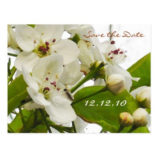 Sakura Wedding - Save the Date Card Post Cards