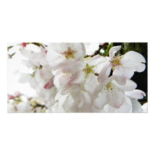 Sakura White Photo Greeting Card