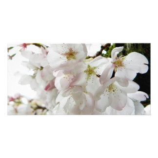 Sakura White Photo Card Template