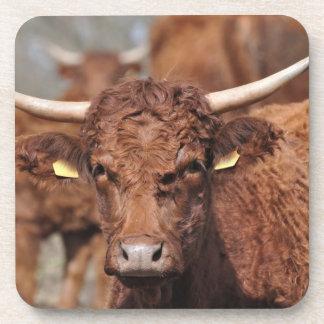 Salers brown horned cow beverage coaster