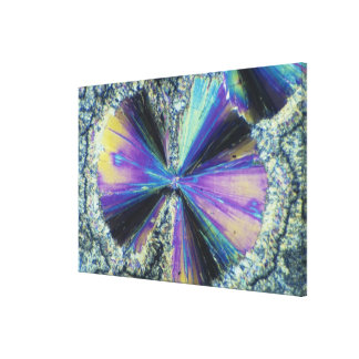 Salicylic Acid Crystals Viewed in Polarized Light Canvas Print