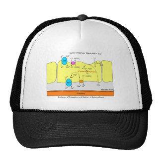 Saliva Gland Secretion Duct Diagram Cap