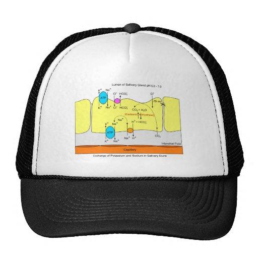 Saliva Gland Secretion Duct Diagram Trucker Hat