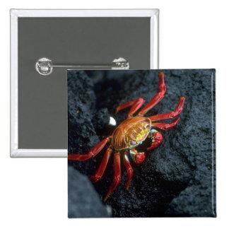 Sally Lightfoot Crab 15 Cm Square Badge