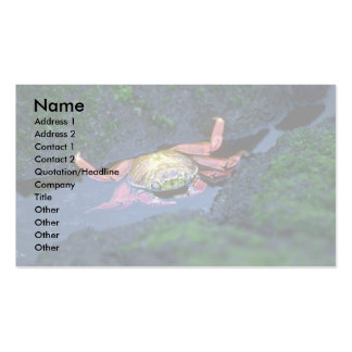 Sally Lightfoot Crab Entering Water Double-Sided Standard Business Cards (Pack Of 100)