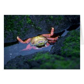 Sally Lightfoot Crab Entering Water Greeting Card