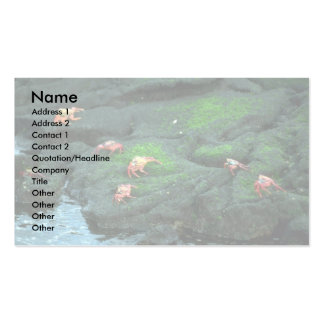 Sally Lightfoot Crabs Pack Of Standard Business Cards