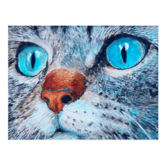 Sally the Blue Eyed Cat Postcard