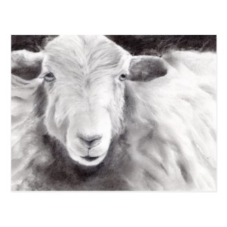 Sally the Sheep (a363) Postcard title=