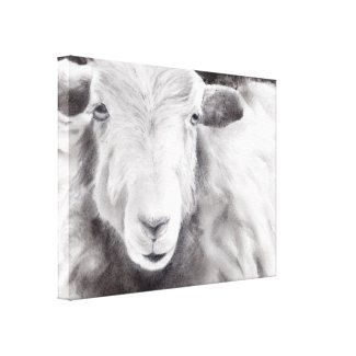 Sally the Sheep (a416) Canvas Print title=