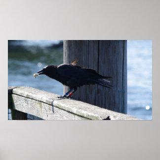 Salmon Fishing Crow Posters